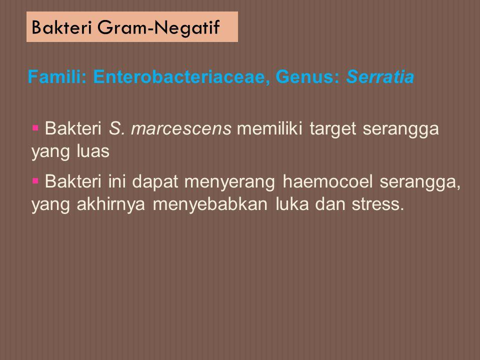 Bakteri Gram-Negatif Famili: Enterobacteriaceae, Genus: Serratia  Bakteri S. marcescens memiliki target serangga yang luas  Bakteri ini dapat menyer