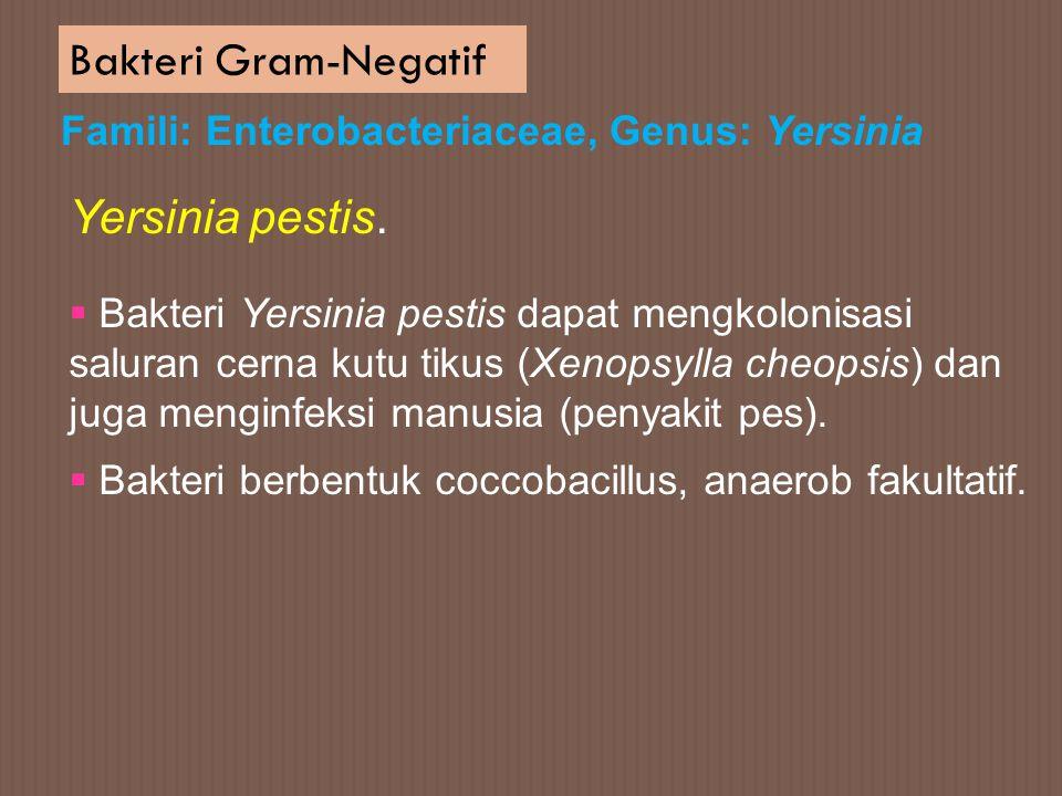 Bakteri Gram-Negatif Famili: Enterobacteriaceae, Genus: Yersinia  Bakteri Yersinia pestis dapat mengkolonisasi saluran cerna kutu tikus (Xenopsylla c