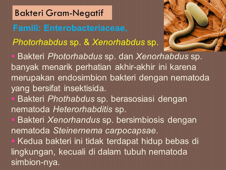 Bakteri Gram-Negatif Famili: Enterobacteriaceae,  Bakteri Photorhabdus sp. dan Xenorhabdus sp. banyak menarik perhatian akhir-akhir ini karena merupa
