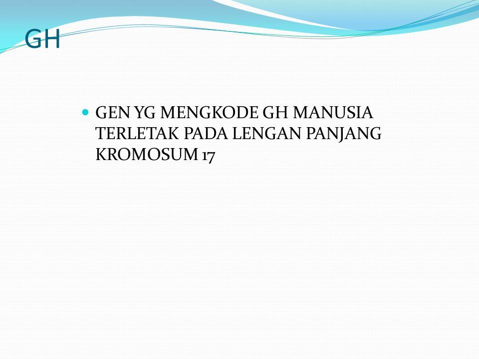 GH GEN YG MENGKODE GH MANUSIA TERLETAK PADA LENGAN PANJANG KROMOSUM 17