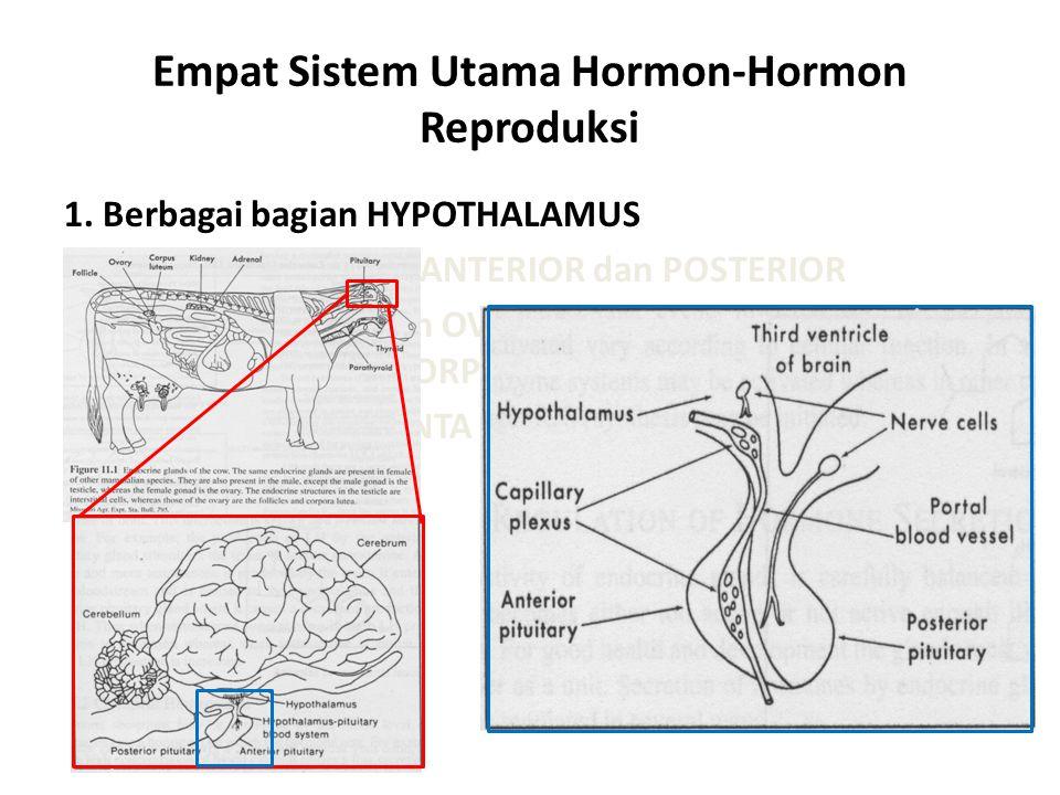 Empat Sistem Utama Hormon-Hormon Reproduksi 1. Berbagai bagian HYPOTHALAMUS HYPOPHYSE Bagian ANTERIOR dan POSTERIOR GONAD : TESTES dan OVARY, termasuk