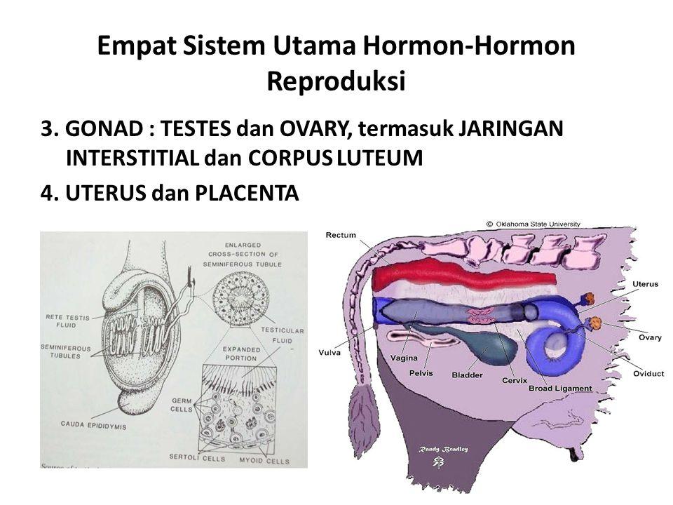 Empat Sistem Utama Hormon-Hormon Reproduksi 3. GONAD : TESTES dan OVARY, termasuk JARINGAN INTERSTITIAL dan CORPUS LUTEUM 4. UTERUS dan PLACENTA