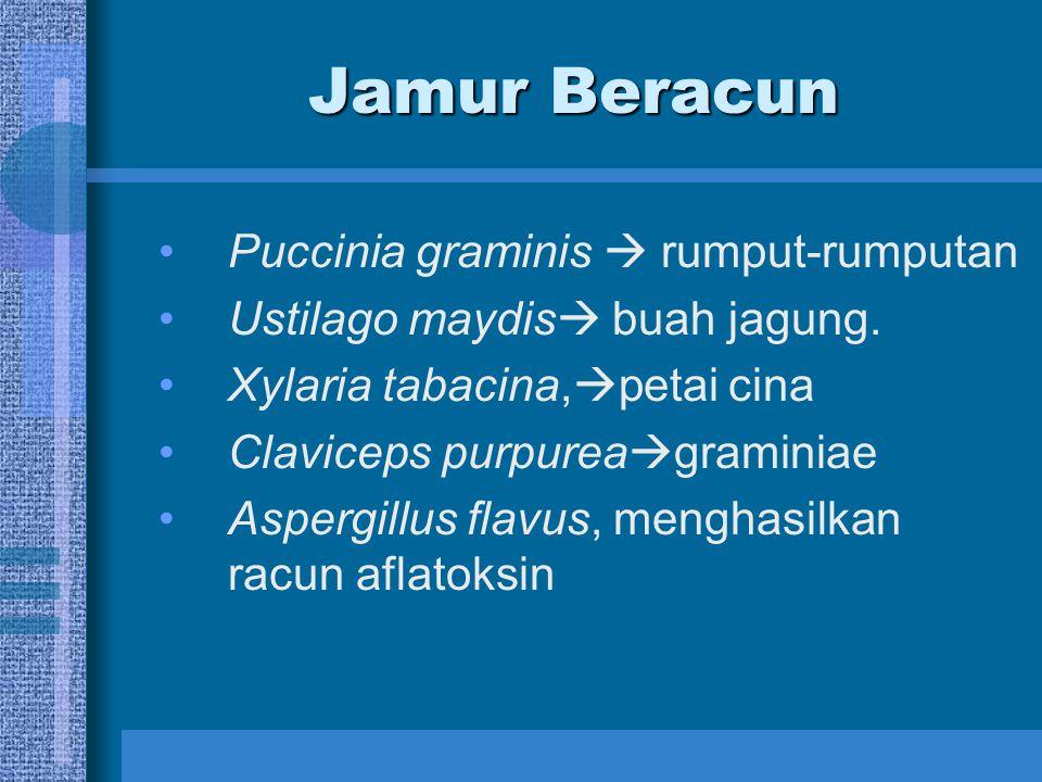 Jamur Beracun Puccinia graminis  rumput-rumputan Ustilago maydis  buah jagung. Xylaria tabacina,  petai cina Claviceps purpurea  graminiae Aspergi