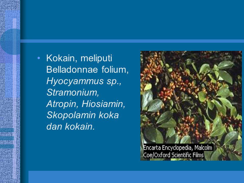 Kokain, meliputi Belladonnae folium, Hyocyammus sp., Stramonium, Atropin, Hiosiamin, Skopolamin koka dan kokain.