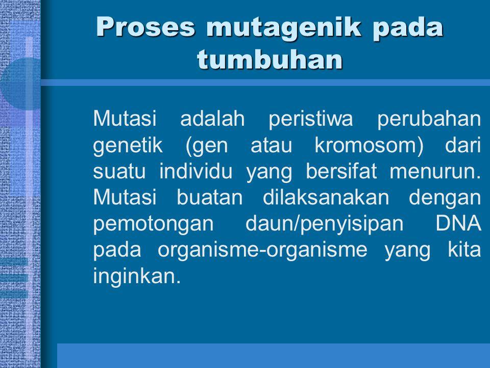 Proses mutagenik pada tumbuhan Mutasi adalah peristiwa perubahan genetik (gen atau kromosom) dari suatu individu yang bersifat menurun. Mutasi buatan