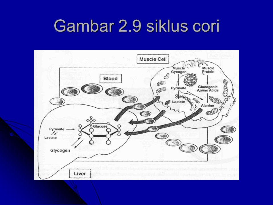 Gambar 2.9 siklus cori
