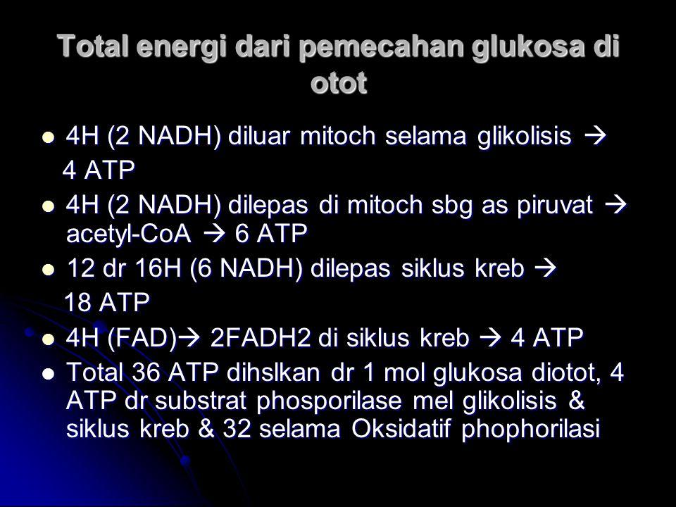 Total energi dari pemecahan glukosa di otot 4H (2 NADH) diluar mitoch selama glikolisis  4H (2 NADH) diluar mitoch selama glikolisis  4 ATP 4 ATP 4H