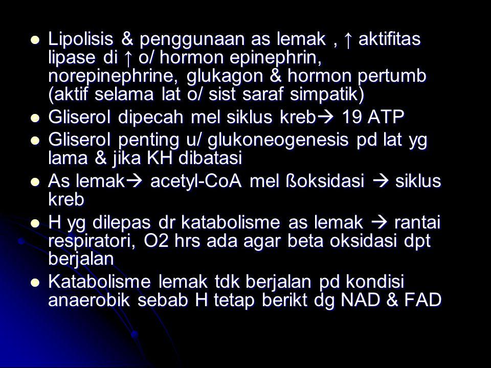 Lipolisis & penggunaan as lemak, ↑ aktifitas lipase di ↑ o/ hormon epinephrin, norepinephrine, glukagon & hormon pertumb (aktif selama lat o/ sist sar