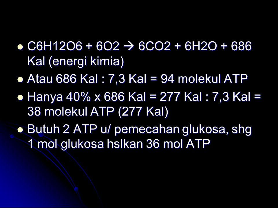 C6H12O6 + 6O2  6CO2 + 6H2O + 686 Kal (energi kimia) C6H12O6 + 6O2  6CO2 + 6H2O + 686 Kal (energi kimia) Atau 686 Kal : 7,3 Kal = 94 molekul ATP Atau