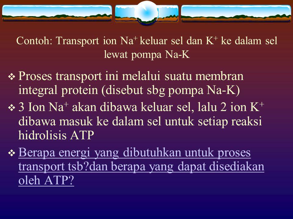   G untuk transport 3 mol Na + = 40,65 kJ   G untuk transport 2 mol K + = 1,94 kJ  G total = 42,59 kJ   G 0 hidrolisis ATP = -30 kJ   G nyata dalam sel = -45~50 kJ Jadi, kebutuhan energi untuk proses transportasi Na-K dapat terpenuhi oleh adanya reasi hidrolisis ATP sebagai reaksi coupling (reaksi pasangannya)