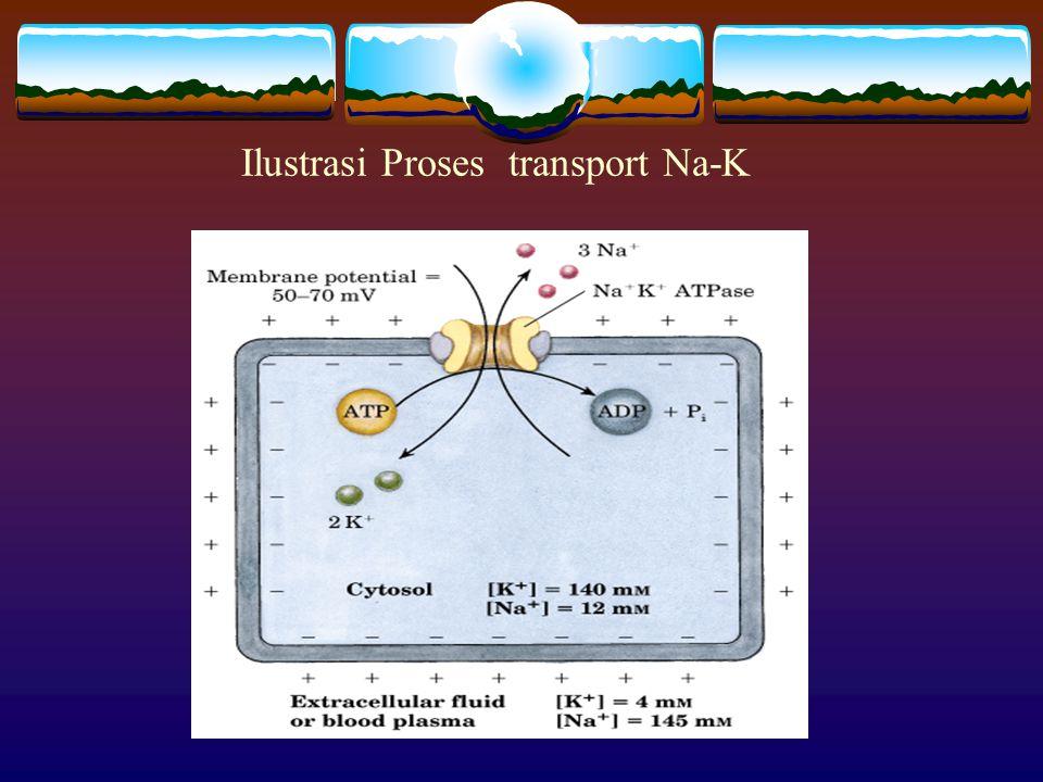 Mekanisme Proses transport Na-K