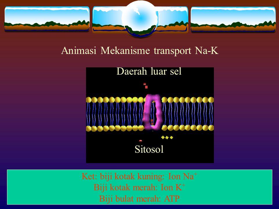 Animasi Mekanisme transport Na-K Daerah luar sel Sitosol Ket: biji kotak kuning: Ion Na + Biji kotak merah: Ion K + Biji bulat merah: ATP