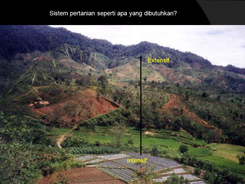 Foto: Cho Sistem pertanian seperti apa yang dibutuhkan Intensif Extensif