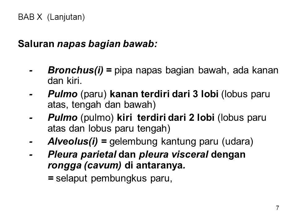 7 BAB X (Lanjutan) Saluran napas bagian bawab: -Bronchus(i) = pipa napas bagian bawah, ada kanan dan kiri. -Pulmo (paru) kanan terdiri dari 3 lobi (lo
