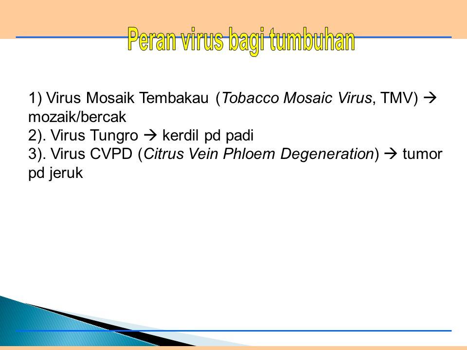 1) Paramyxovirus  NCD 2) Foot and Mouth Desease  penyakit kuku & mulut 3) Rhabdo virus  rabies 4). Rous Sarcoma Virus (RSV)  tumor pd ayam 5). Bov