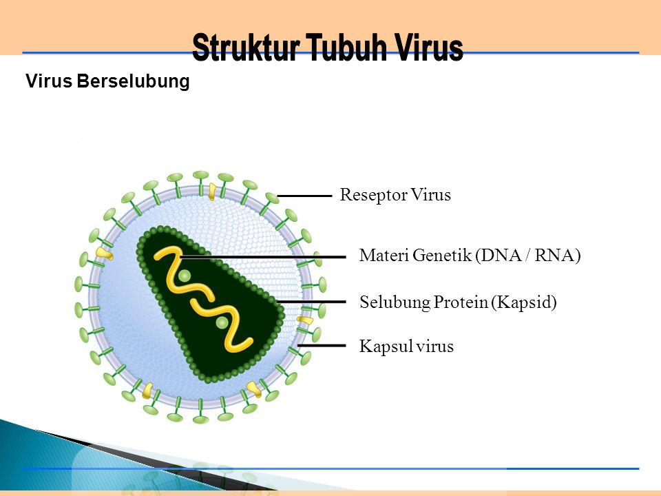 Virus Berselubung Materi Genetik (DNA / RNA) Selubung Protein (Kapsid) Kapsul virus Reseptor Virus