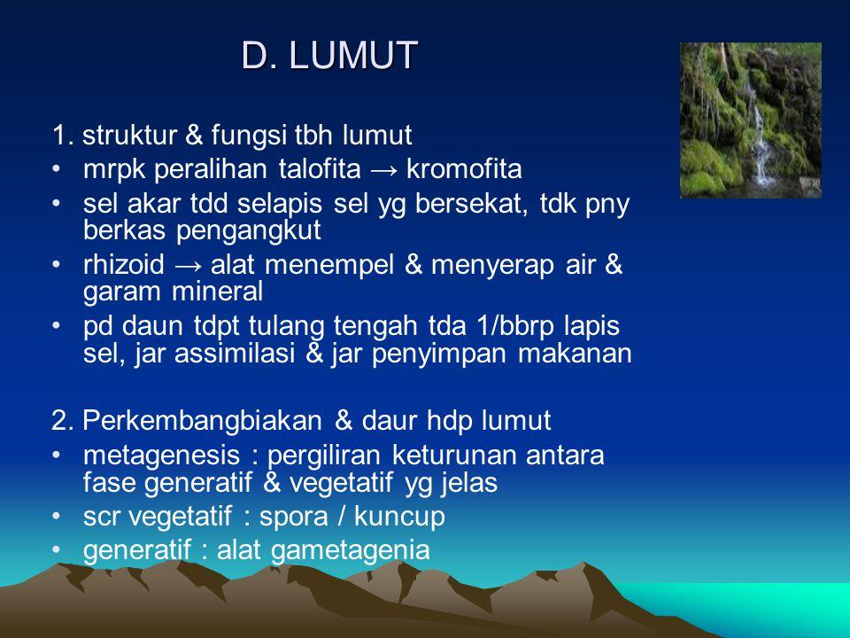 D.LUMUT 1.