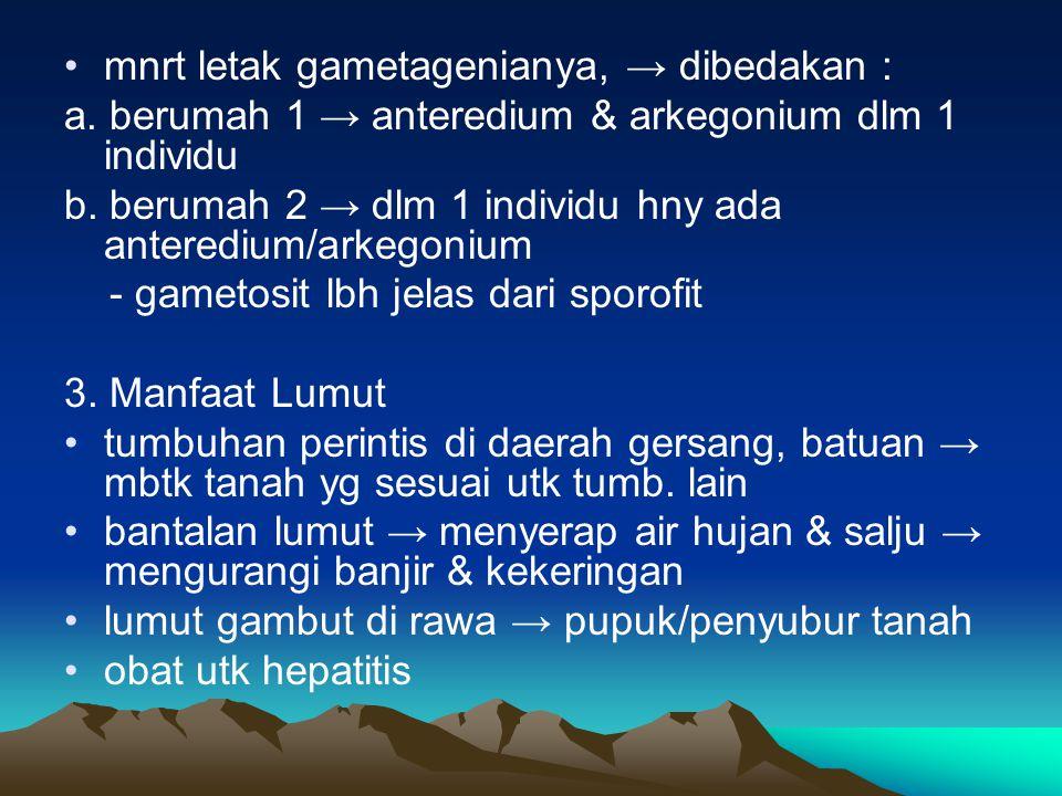 mnrt letak gametagenianya, → dibedakan : a. berumah 1 → anteredium & arkegonium dlm 1 individu b. berumah 2 → dlm 1 individu hny ada anteredium/arkego