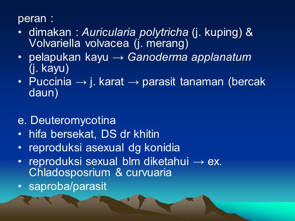 peran : dimakan : Auricularia polytricha (j. kuping) & Volvariella volvacea (j. merang) pelapukan kayu → Ganoderma applanatum (j. kayu) Puccinia → j.