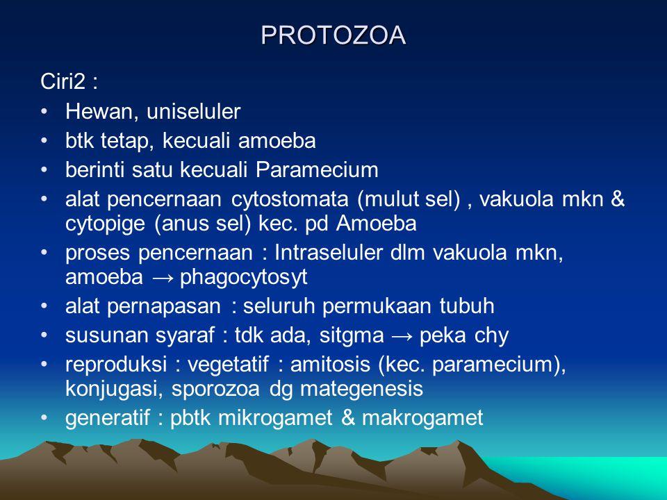 PROTOZOA Ciri2 : Hewan, uniseluler btk tetap, kecuali amoeba berinti satu kecuali Paramecium alat pencernaan cytostomata (mulut sel), vakuola mkn & cytopige (anus sel) kec.
