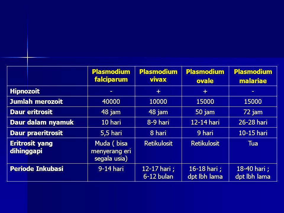 Plasmodium falciparum Plasmodium vivax PlasmodiumovalePlasmodiummalariae Hipnozoit-++- Jumlah merozoit 40000100001500015000 Daur eritrosit 48 jam 50 j