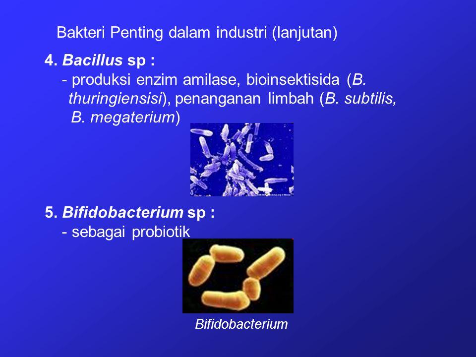 Bakteri Penting dalam industri (lanjutan) 4. Bacillus sp : - produksi enzim amilase, bioinsektisida (B. thuringiensisi), penanganan limbah (B. subtili