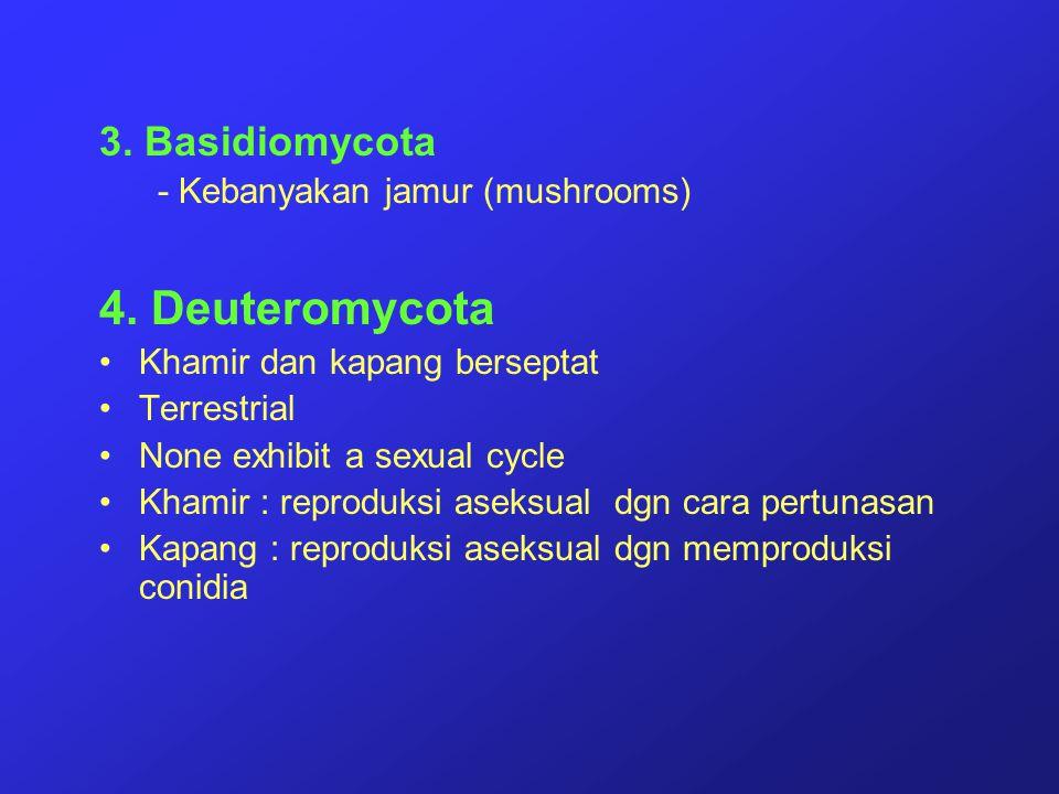 3. Basidiomycota - Kebanyakan jamur (mushrooms) 4. Deuteromycota Khamir dan kapang berseptat Terrestrial None exhibit a sexual cycle Khamir : reproduk
