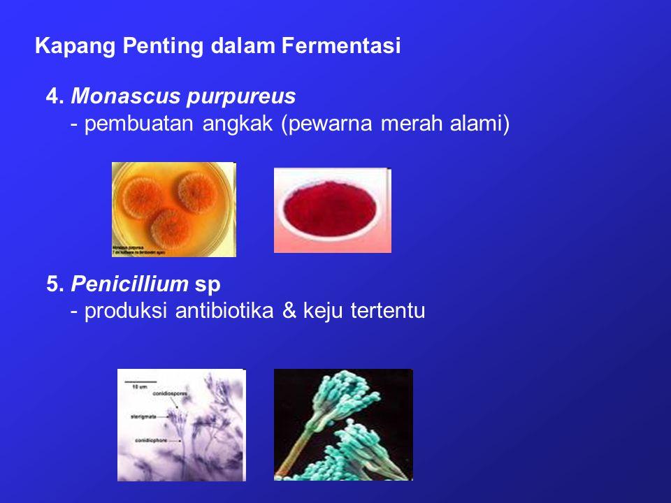 Kapang Penting dalam Fermentasi 4. Monascus purpureus - pembuatan angkak (pewarna merah alami) 5. Penicillium sp - produksi antibiotika & keju tertent