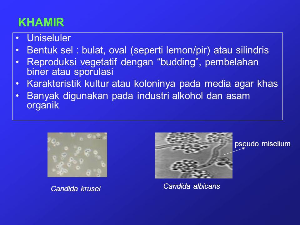 """KHAMIR Uniseluler Bentuk sel : bulat, oval (seperti lemon/pir) atau silindris Reproduksi vegetatif dengan """"budding"""", pembelahan biner atau sporulasi K"""