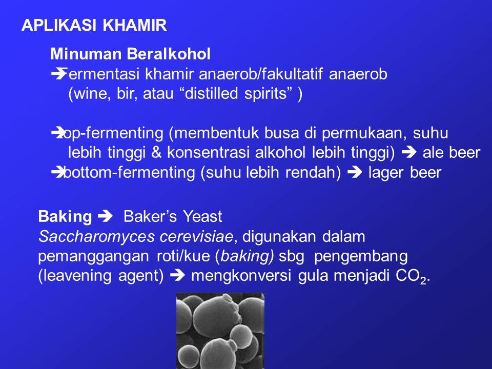 "Minuman Beralkohol  Fermentasi khamir anaerob/fakultatif anaerob (wine, bir, atau ""distilled spirits"" )  top-fermenting (membentuk busa di permukaan"