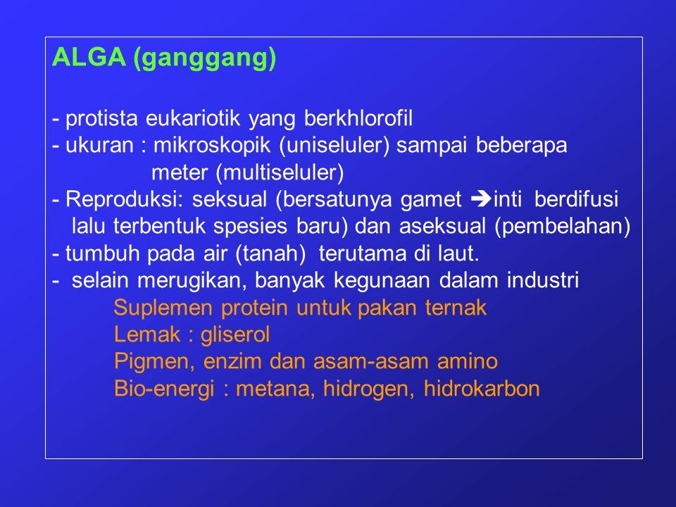 ALGA (ganggang) - protista eukariotik yang berkhlorofil - ukuran : mikroskopik (uniseluler) sampai beberapa meter (multiseluler) - Reproduksi: seksual