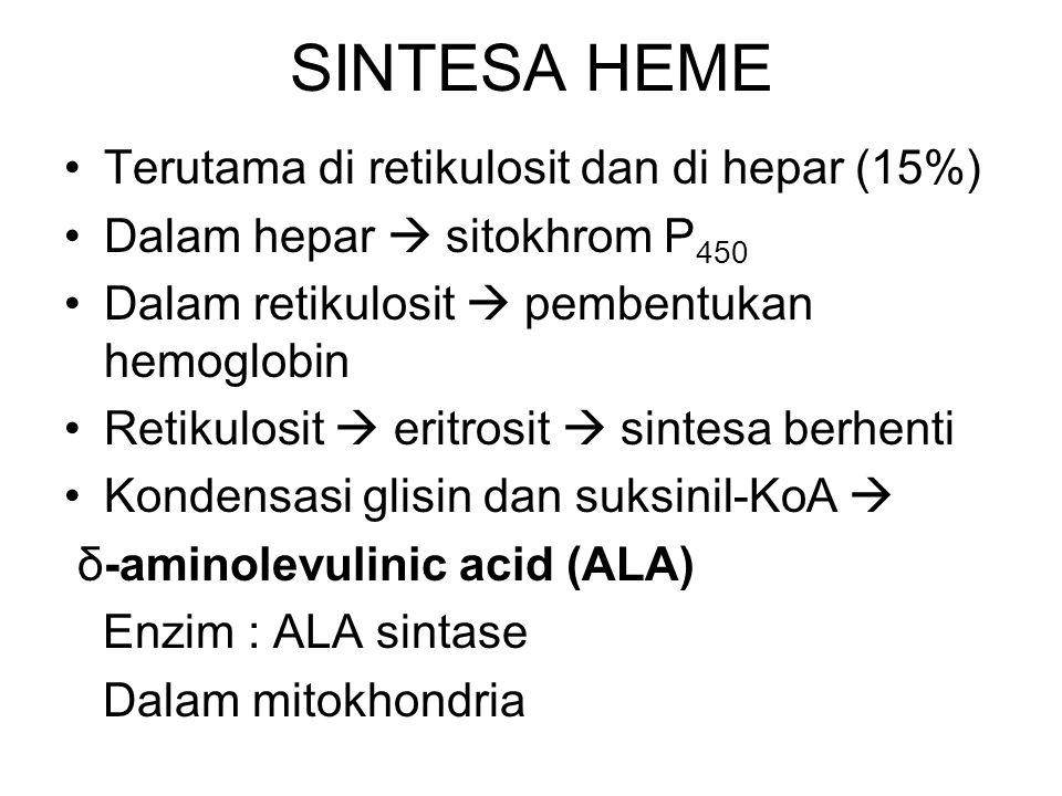 SINTESA HEME Terutama di retikulosit dan di hepar (15%) Dalam hepar  sitokhrom P 450 Dalam retikulosit  pembentukan hemoglobin Retikulosit  eritros