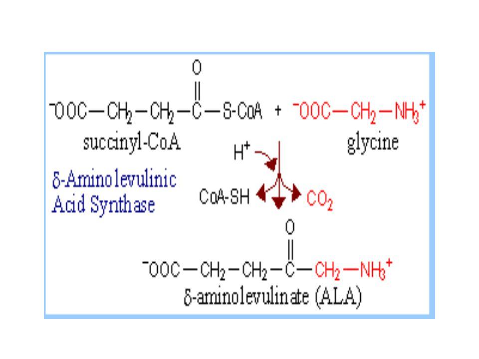 Dua molekul ALA  porfobilinogen (PBG PBG sintase (ALA dehidrase) Dalam sitosol