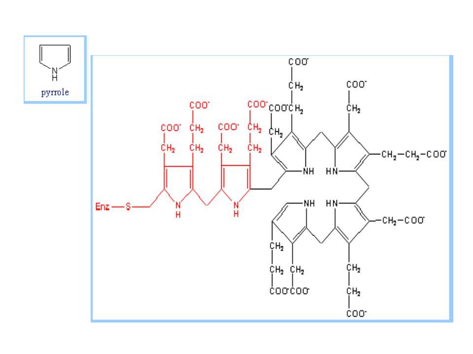 Katabolisme heme Eritrosit (120 hari) = 6 gram Hb/hari  retikuloendotelial sel (hepar, sumsum tulang dan limpa)  hemoglobin  methemoglobin  heme lepas  hemin  Dalam hepar (terutama)  Hb  globin & heme  heme  biliverdin (hijau) + Fe dan CO