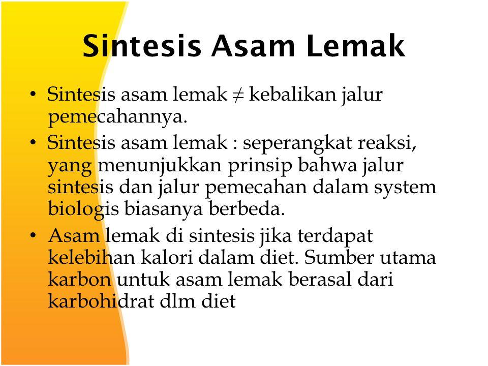 Sintesis Asam Lemak Sintesis asam lemak ≠ kebalikan jalur pemecahannya.