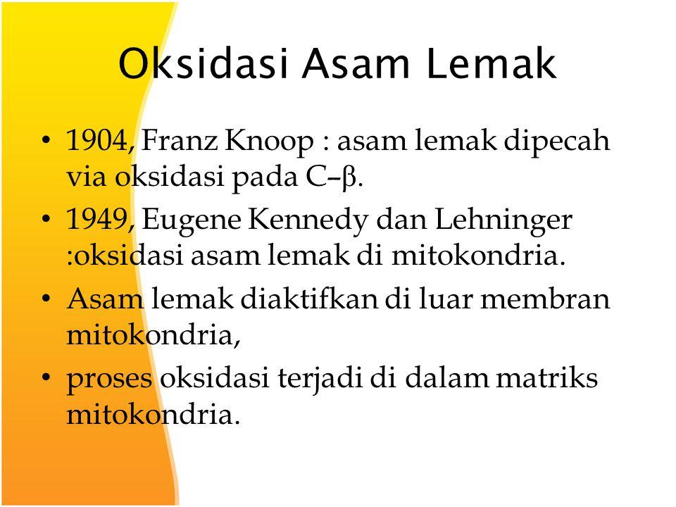 Oksidasi Asam Lemak 1904, Franz Knoop : asam lemak dipecah via oksidasi pada C– β.