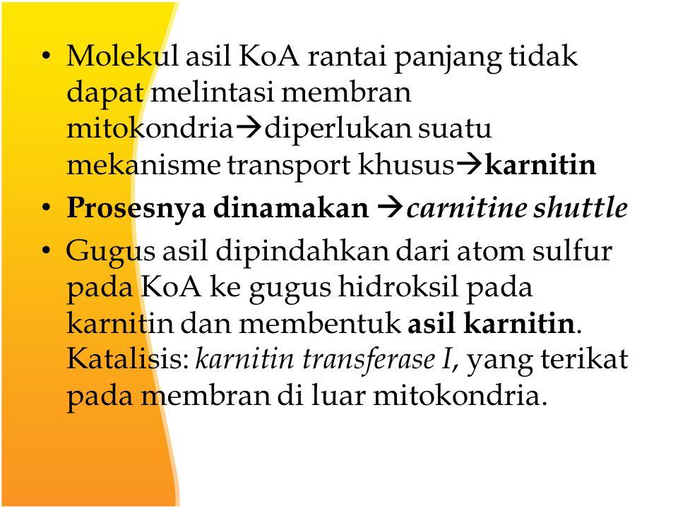 Molekul asil KoA rantai panjang tidak dapat melintasi membran mitokondria  diperlukan suatu mekanisme transport khusus  karnitin Prosesnya dinamakan  carnitine shuttle Gugus asil dipindahkan dari atom sulfur pada KoA ke gugus hidroksil pada karnitin dan membentuk asil karnitin.
