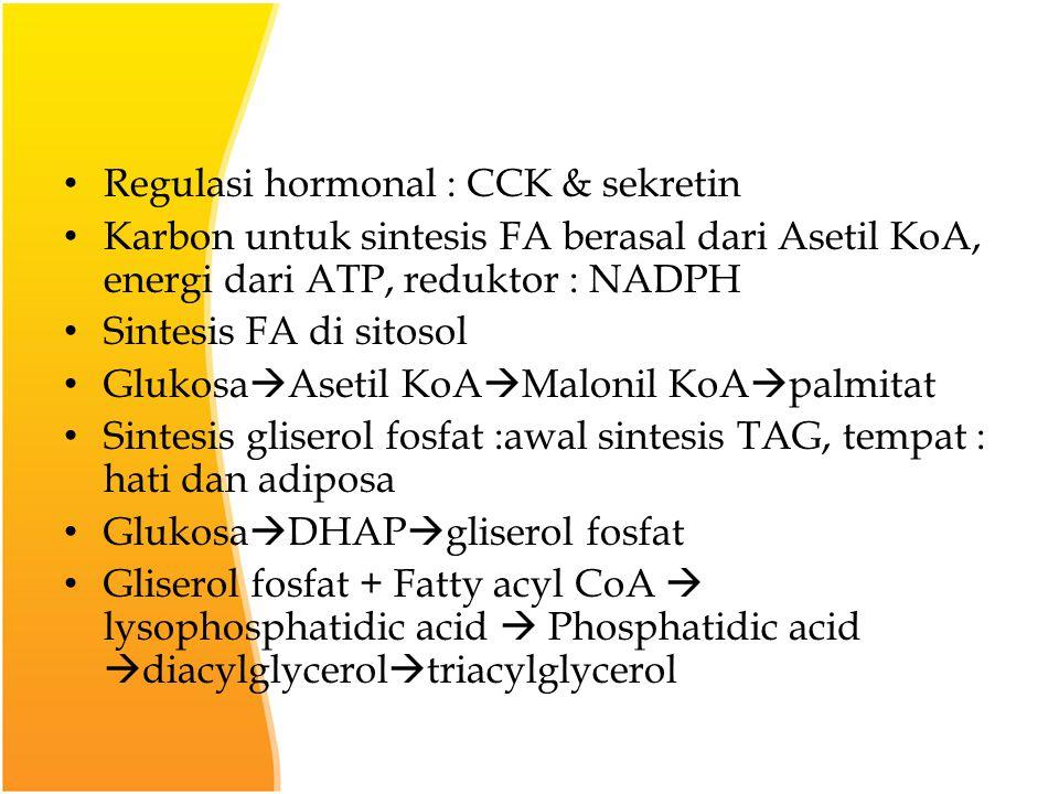 Regulasi hormonal : CCK & sekretin Karbon untuk sintesis FA berasal dari Asetil KoA, energi dari ATP, reduktor : NADPH Sintesis FA di sitosol Glukosa  Asetil KoA  Malonil KoA  palmitat Sintesis gliserol fosfat :awal sintesis TAG, tempat : hati dan adiposa Glukosa  DHAP  gliserol fosfat Gliserol fosfat + Fatty acyl CoA  lysophosphatidic acid  Phosphatidic acid  diacylglycerol  triacylglycerol