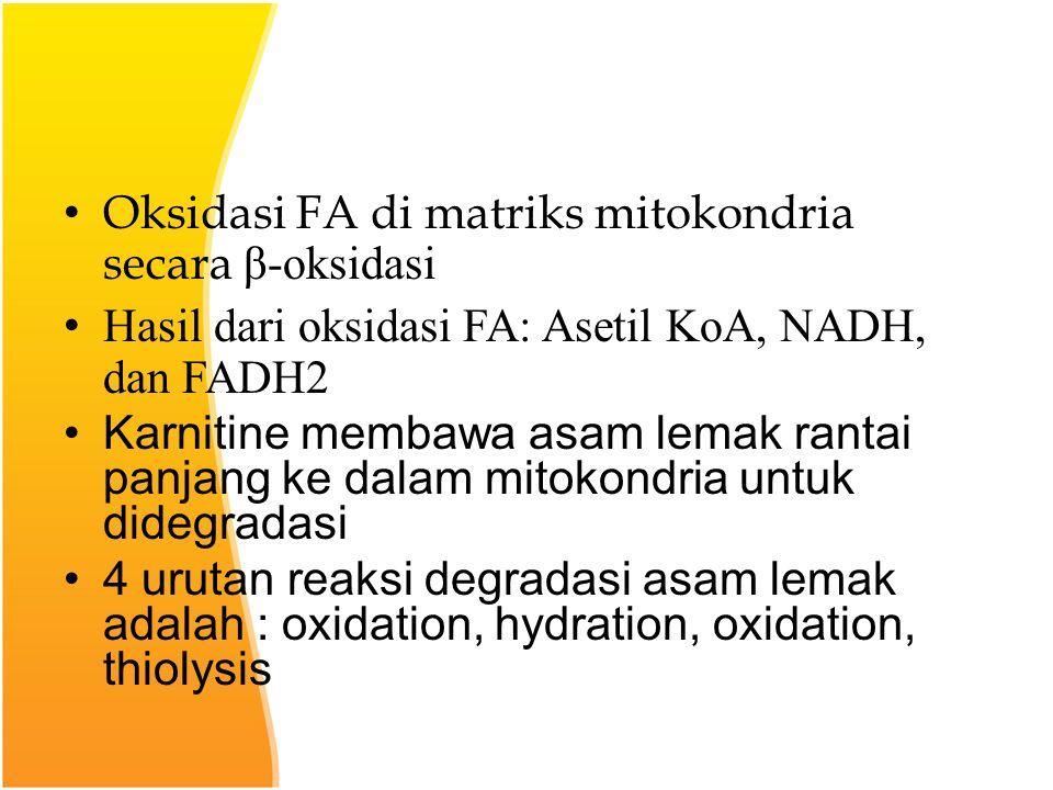 Oksidasi FA di matriks mitokondria secara β-oksidasi Hasil dari oksidasi FA: Asetil KoA, NADH, dan FADH2 Karnitine membawa asam lemak rantai panjang ke dalam mitokondria untuk didegradasi 4 urutan reaksi degradasi asam lemak adalah : oxidation, hydration, oxidation, thiolysis