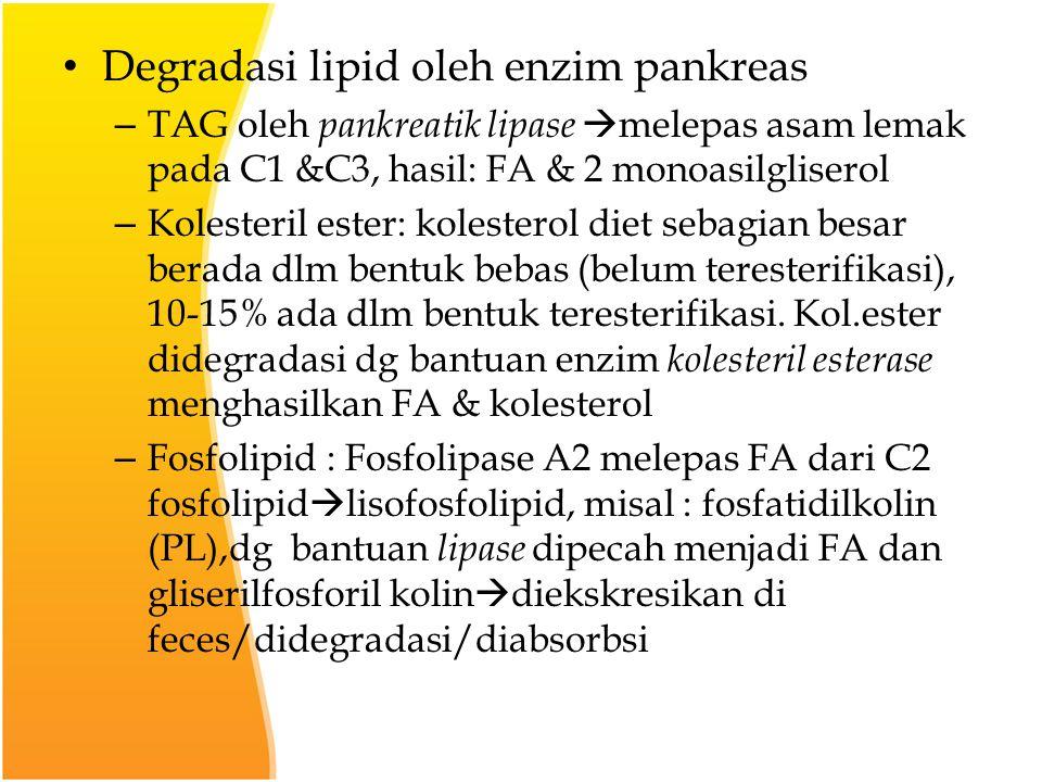 Degradasi lipid oleh enzim pankreas – TAG oleh pankreatik lipase  melepas asam lemak pada C1 &C3, hasil: FA & 2 monoasilgliserol – Kolesteril ester: kolesterol diet sebagian besar berada dlm bentuk bebas (belum teresterifikasi), 10-15% ada dlm bentuk teresterifikasi.