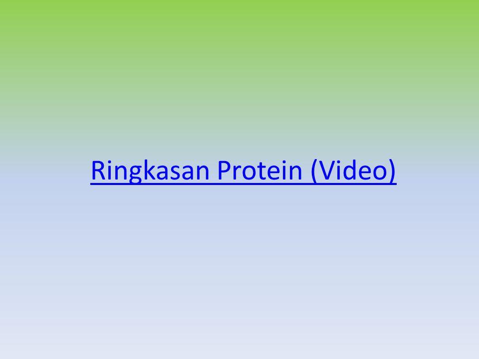 Ringkasan Protein (Video)