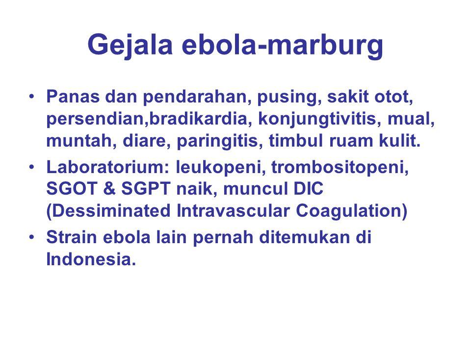 Gejala ebola-marburg Panas dan pendarahan, pusing, sakit otot, persendian,bradikardia, konjungtivitis, mual, muntah, diare, paringitis, timbul ruam ku
