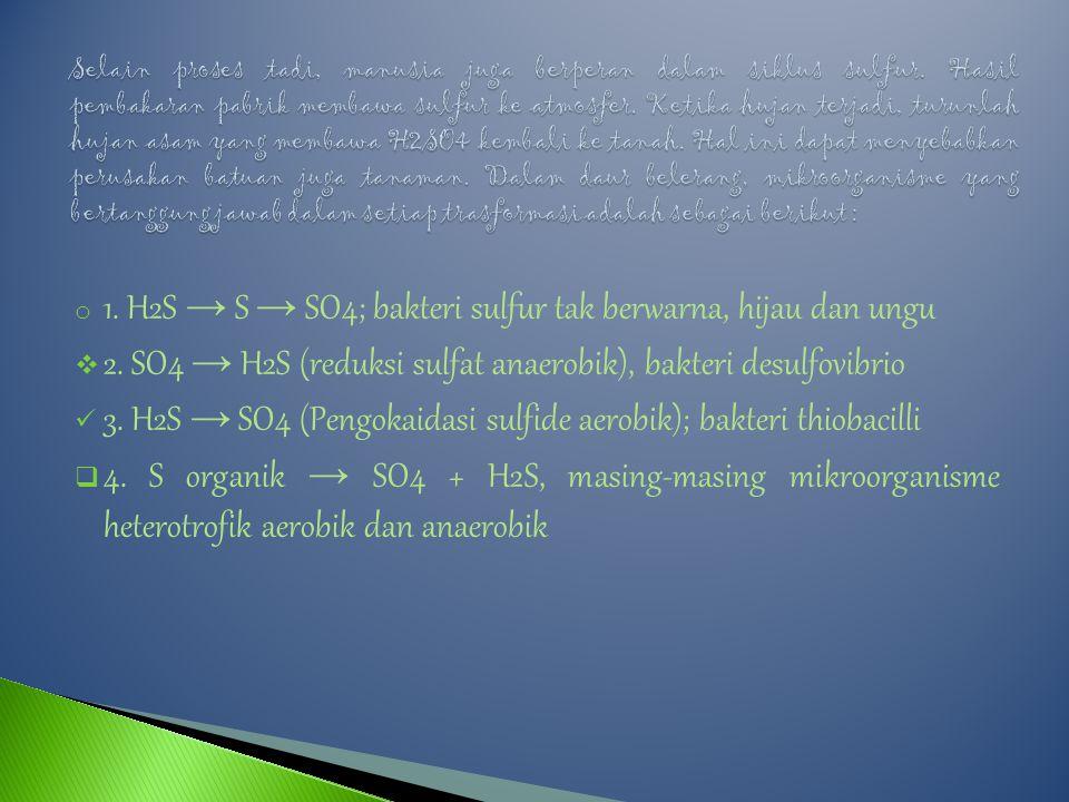 o 1.H2S → S → SO4; bakteri sulfur tak berwarna, hijau dan ungu  2.