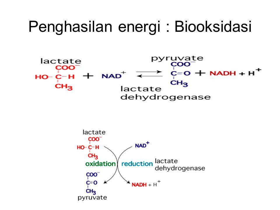 Penghasilan energi : Biooksidasi