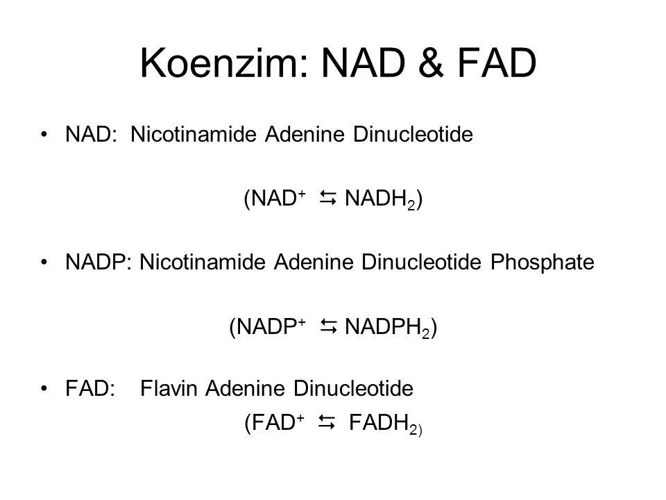 Koenzim: NAD & FAD NAD: Nicotinamide Adenine Dinucleotide (NAD +  NADH 2 ) NADP: Nicotinamide Adenine Dinucleotide Phosphate (NADP +  NADPH 2 ) FAD: