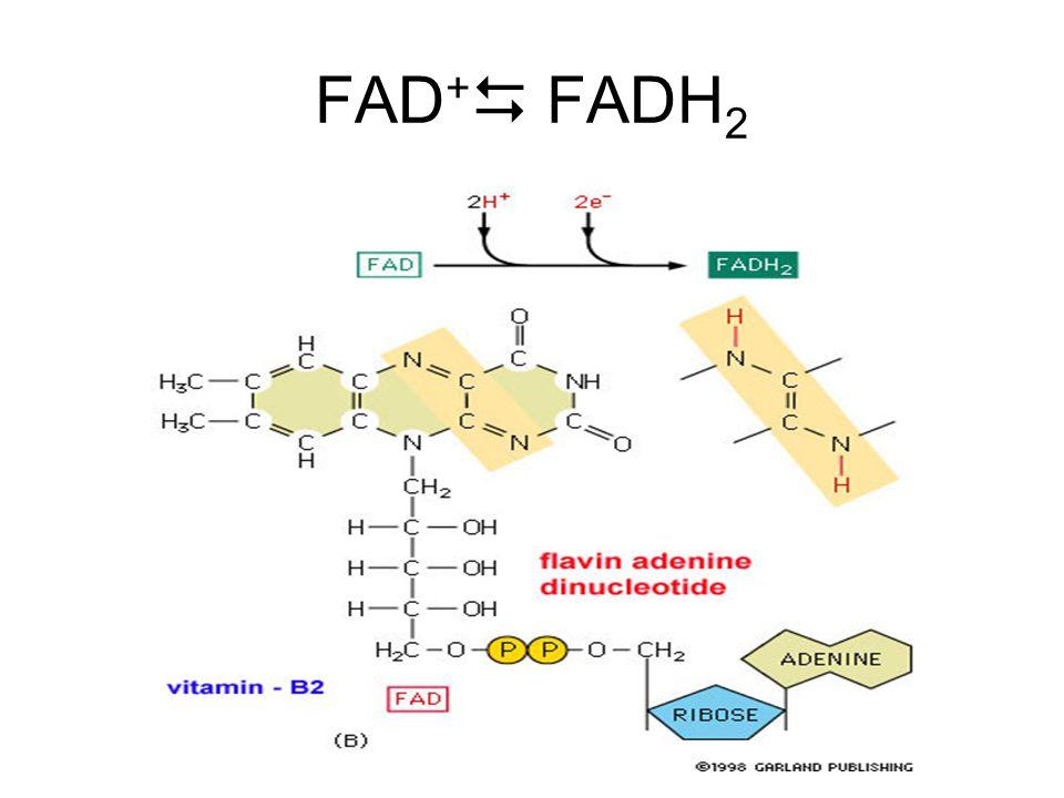 FAD +  FADH 2