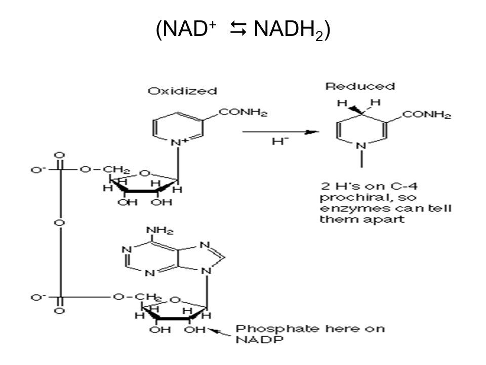 (NAD +  NADH 2 )