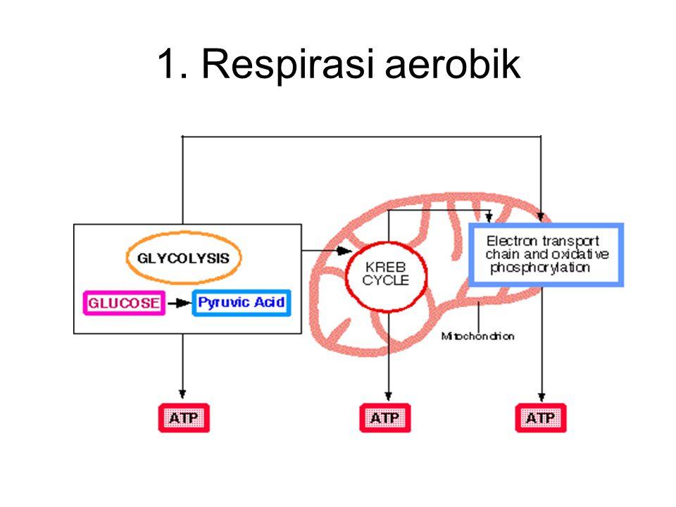 1. Respirasi aerobik
