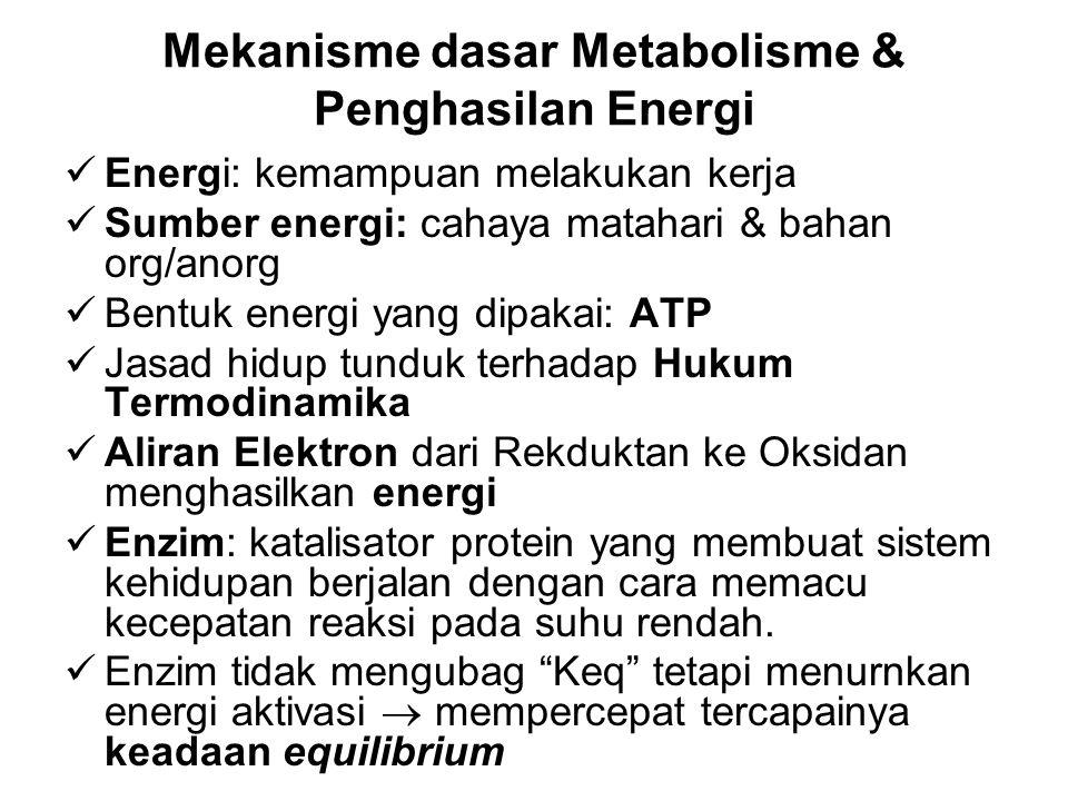 Mekanisme dasar Metabolisme & Penghasilan Energi Energi: kemampuan melakukan kerja Sumber energi: cahaya matahari & bahan org/anorg Bentuk energi yang