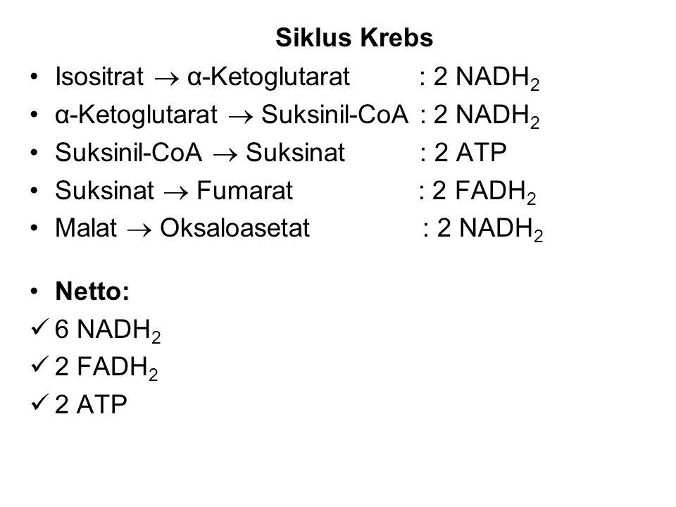 Siklus Krebs Isositrat  α-Ketoglutarat : 2 NADH 2 α-Ketoglutarat  Suksinil-CoA : 2 NADH 2 Suksinil-CoA  Suksinat : 2 ATP Suksinat  Fumarat : 2 FAD